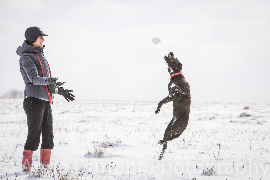 Dog catching snowballs
